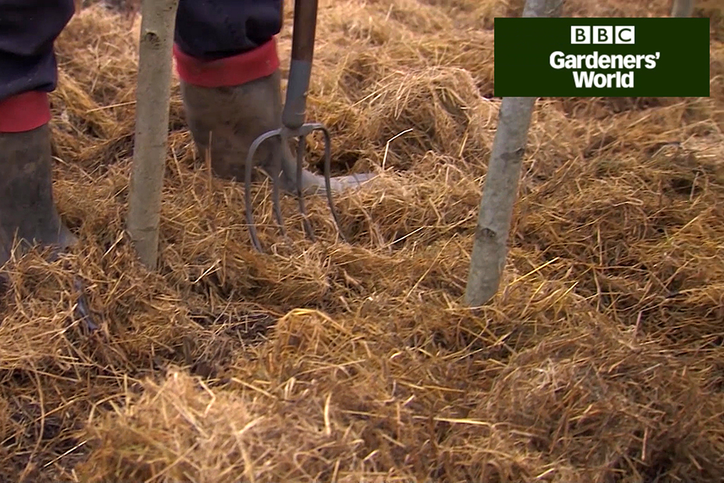 How to mulch raspberry canes video