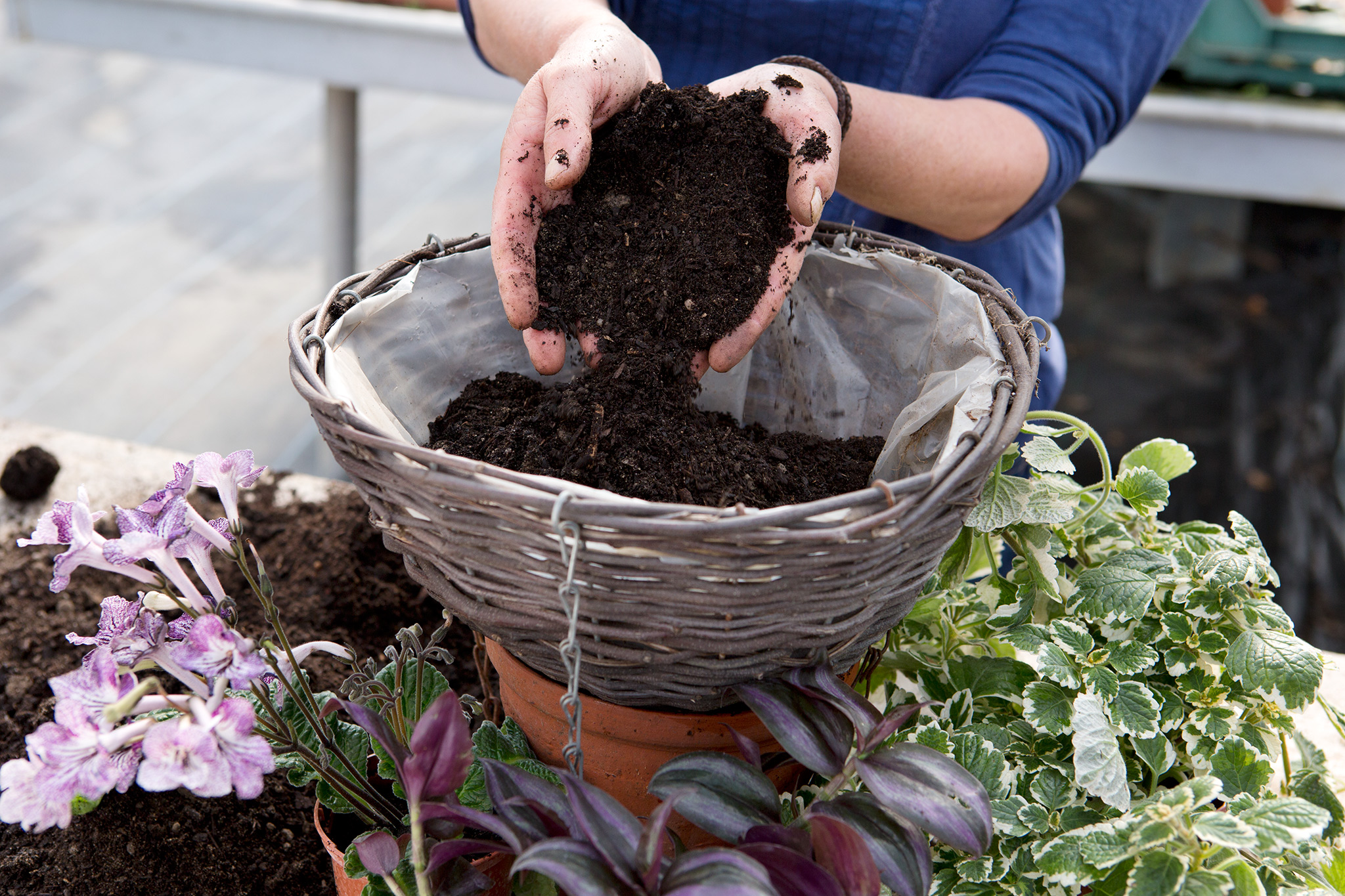 filling-basket-with-potting-compost-2