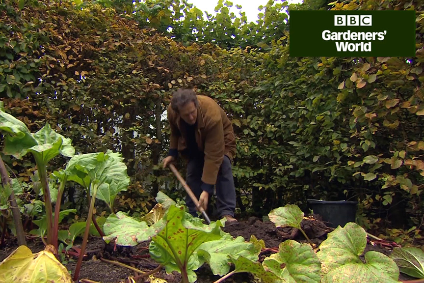 How to divide rhubarb in autumn video