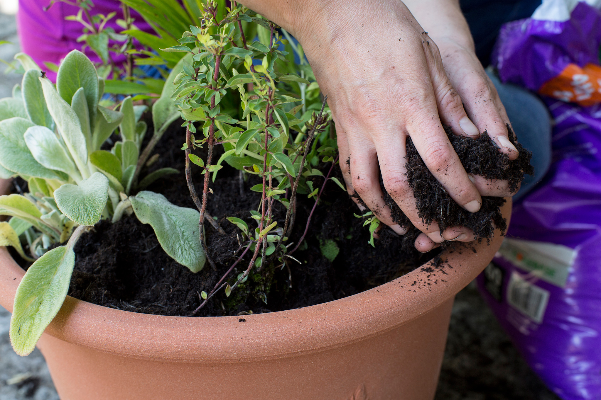 filling-the-gaps-with-compost-2