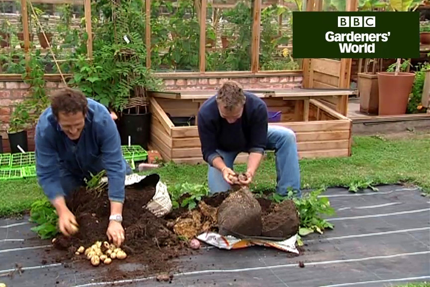 How to harvest bag-grown potatoes video
