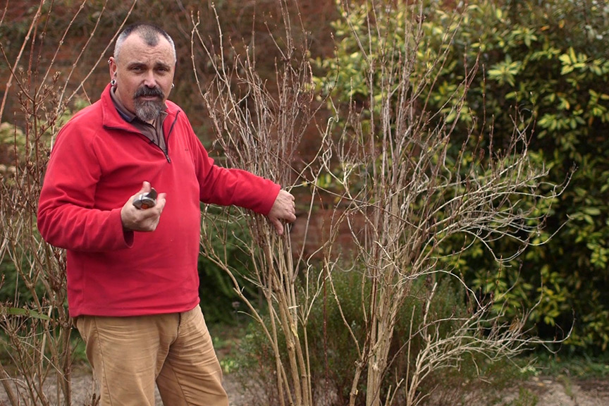 The basics of shrub pruning NFG video