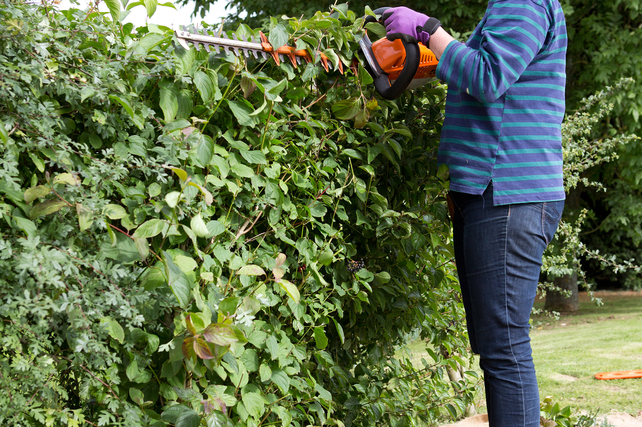 cutting-back-a-native-hedge-2