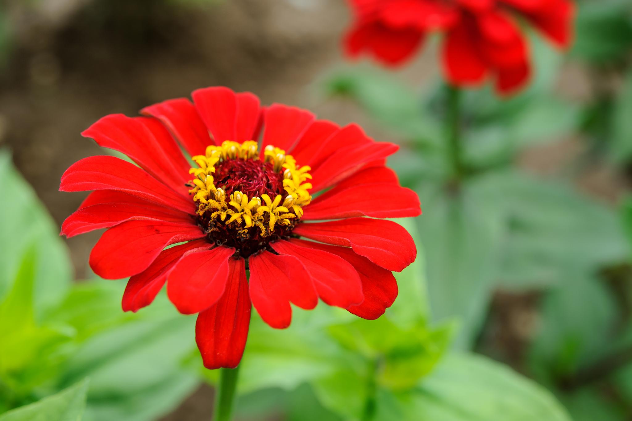 Flower seeds to sow in may gardenersworld izmirmasajfo