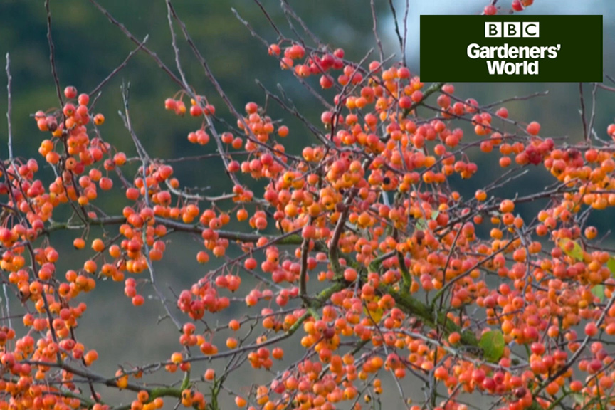 How to plant a crab apple video