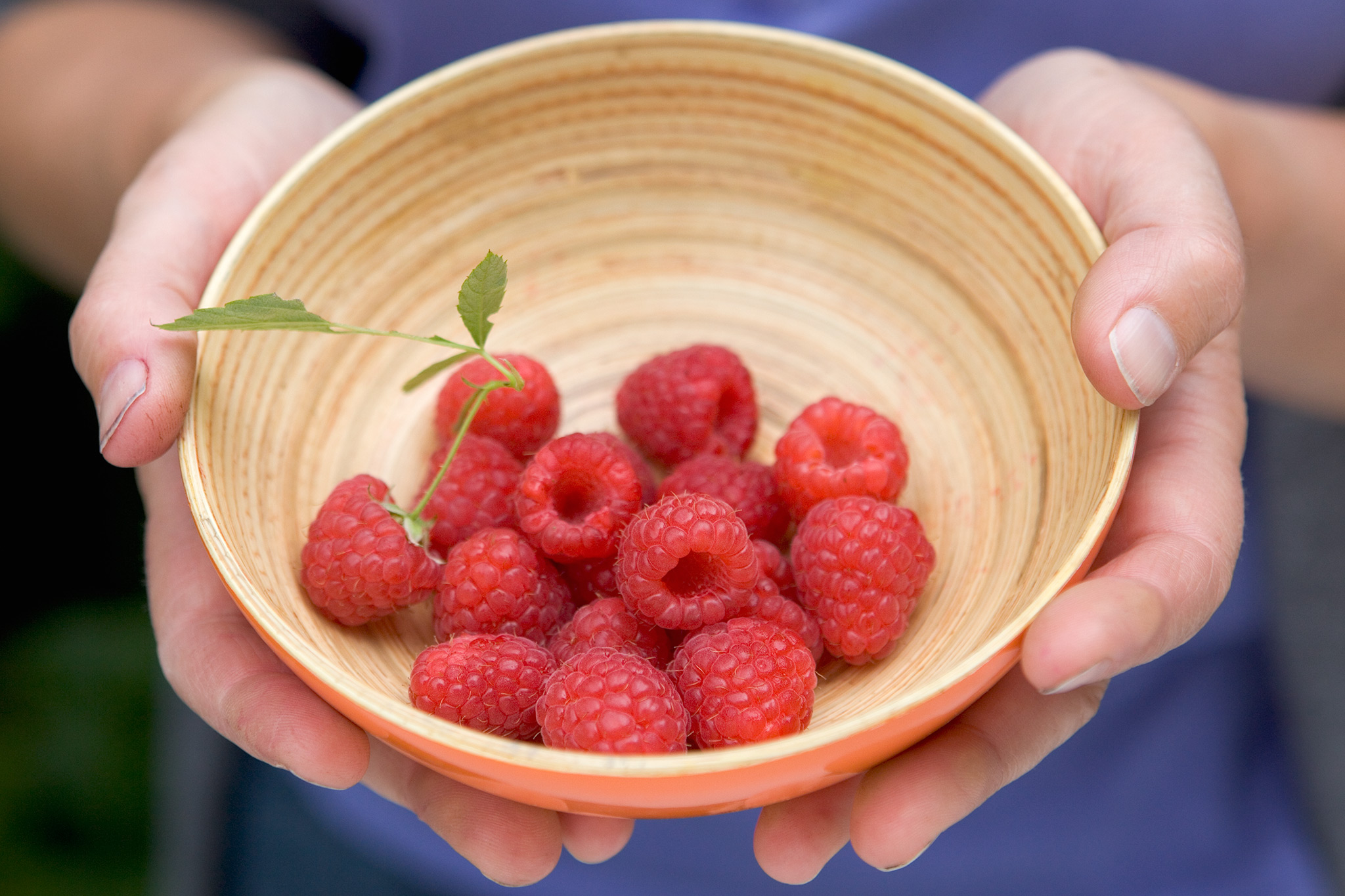 Raspberries: How to Plant, Grow, and Harvest Raspberries ...