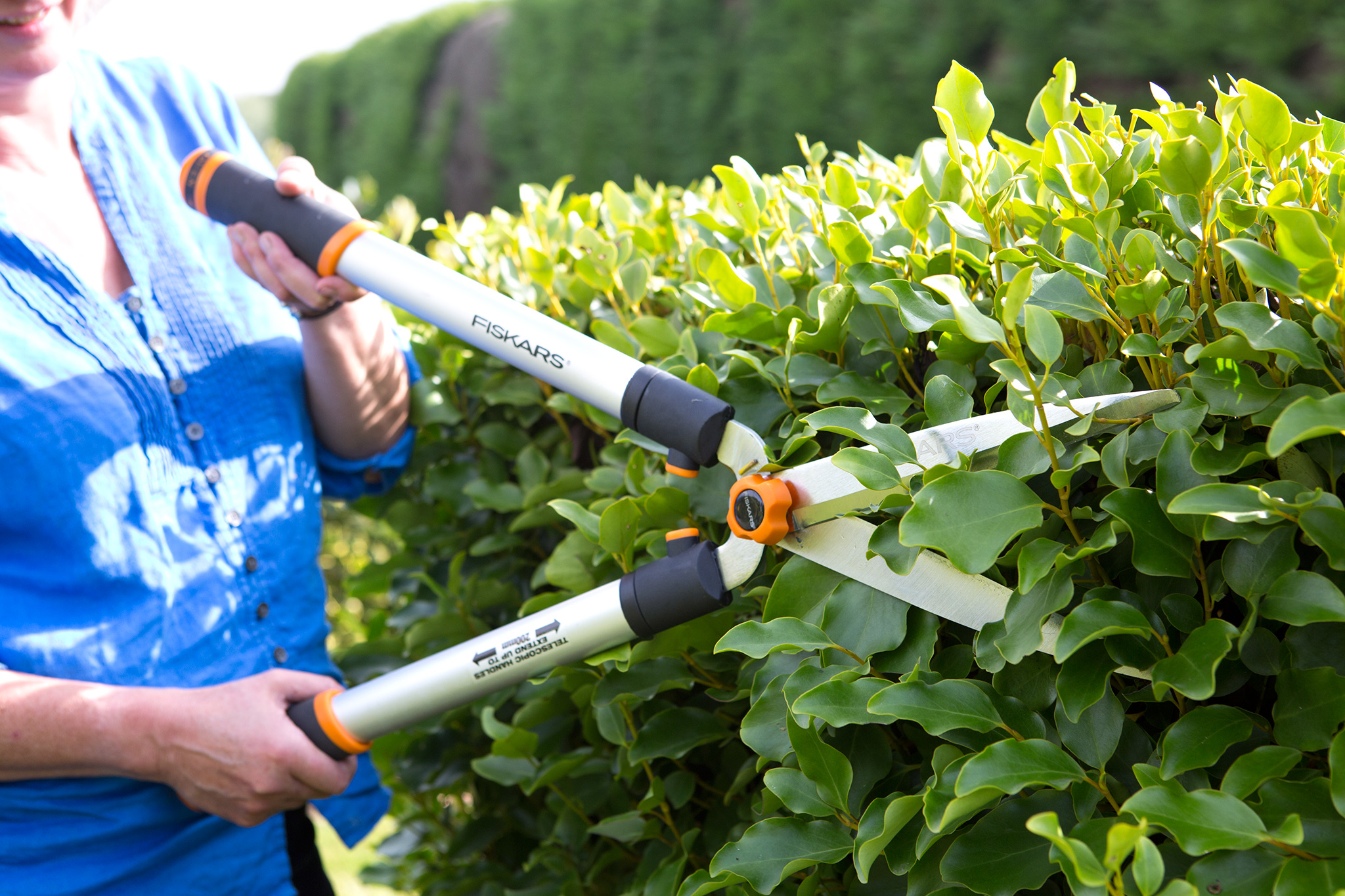 pruning-the-sides-of-a-hedge-2