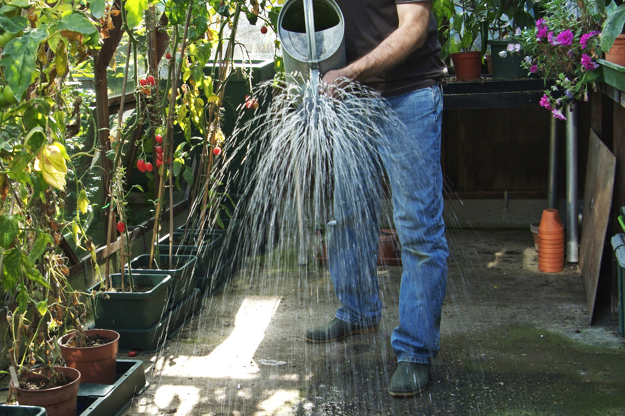 Damping down the greenhouse