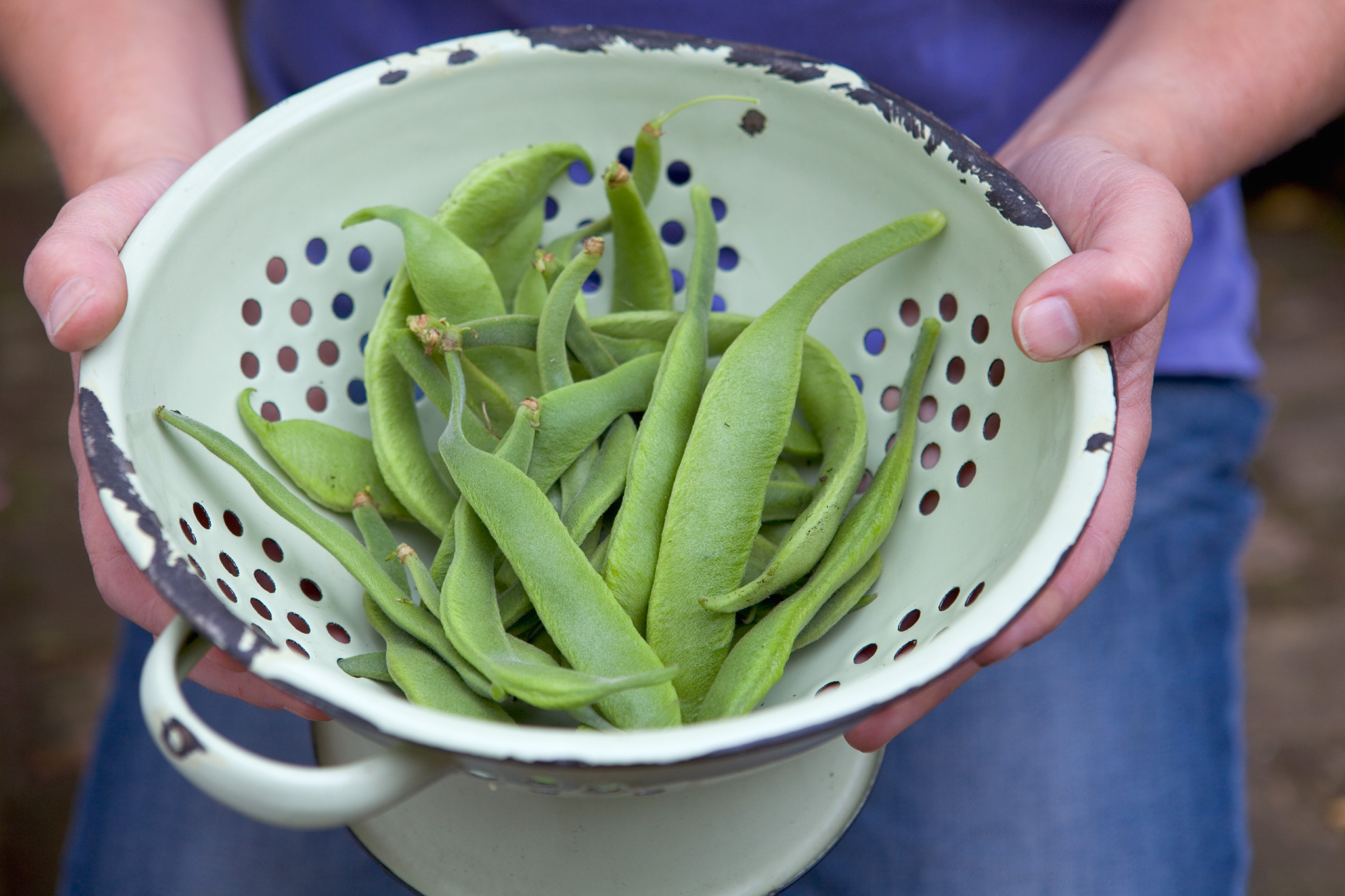 colander-full-of-fresh-runner-beans-3