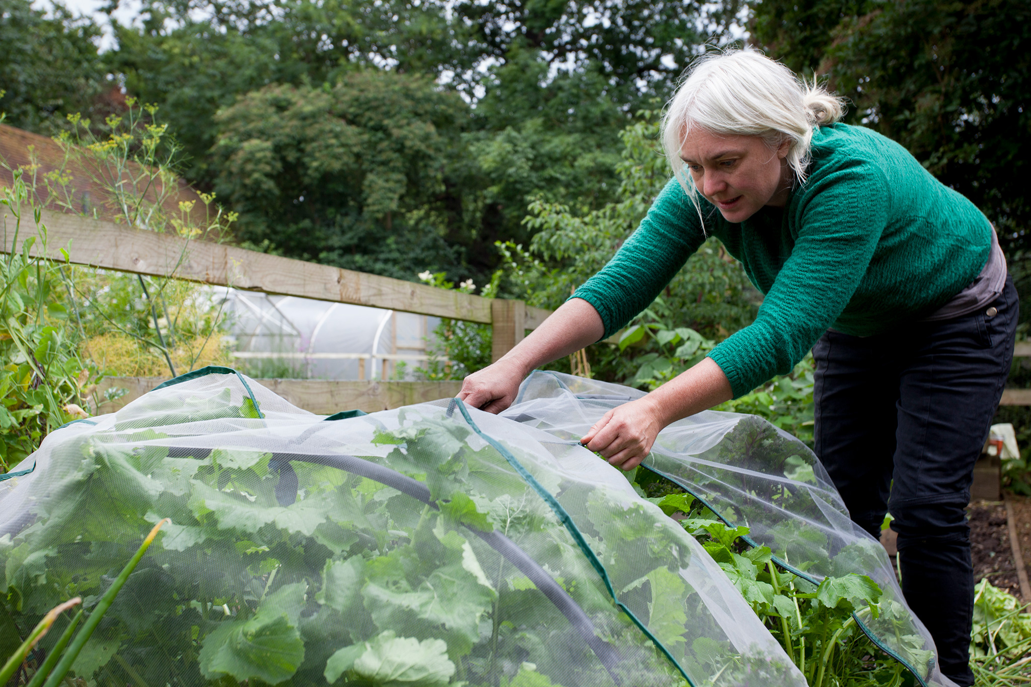 Allotment jobs for November - covering crops