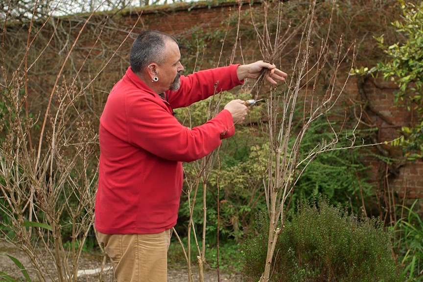 Pruning spring-flowering shrubs video