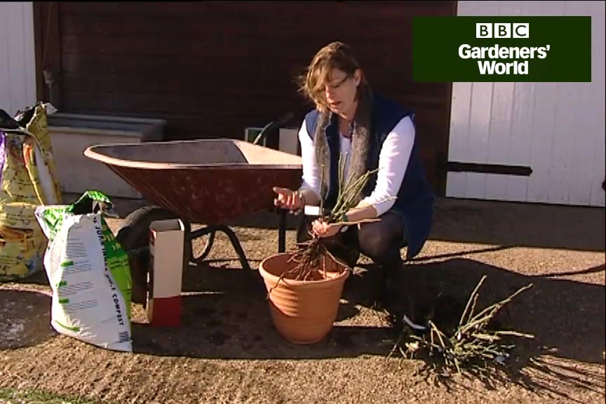 How to plant a bare-root tree or shrub video
