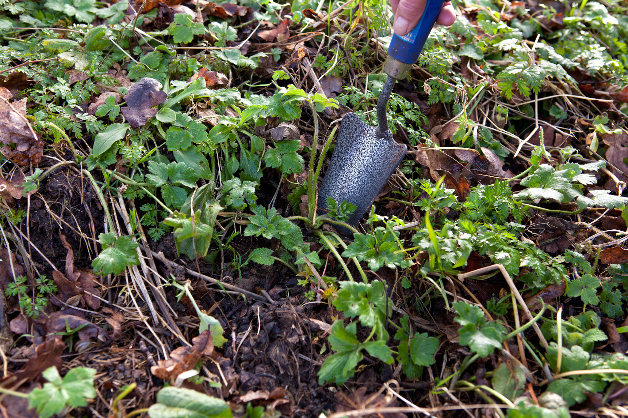 Weeding without Chemicals