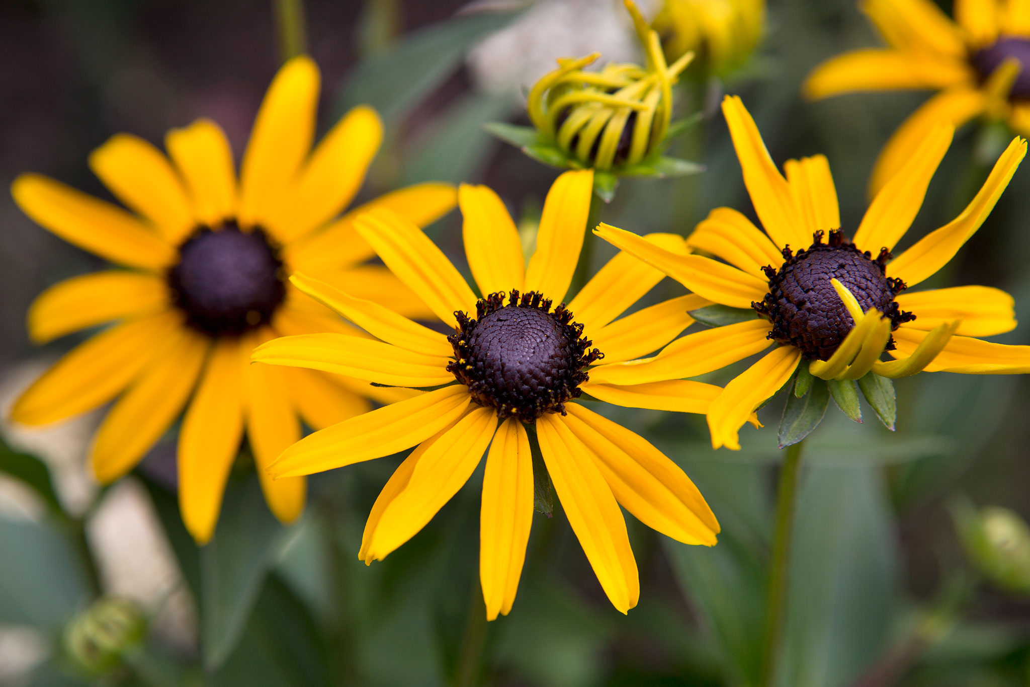 10 Cut Flowers To Grow From Seed Gardenersworld