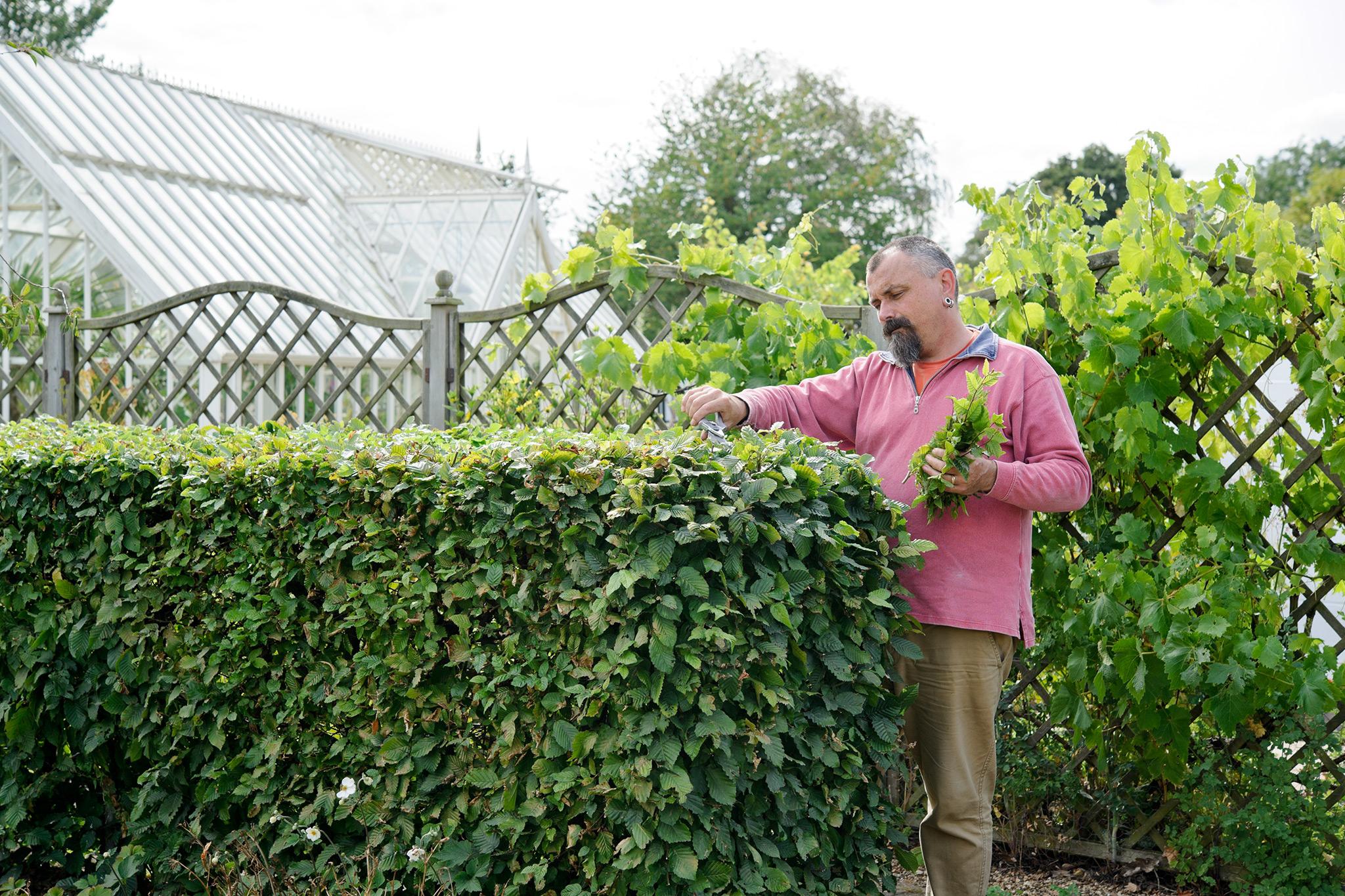 removing-prunings-2