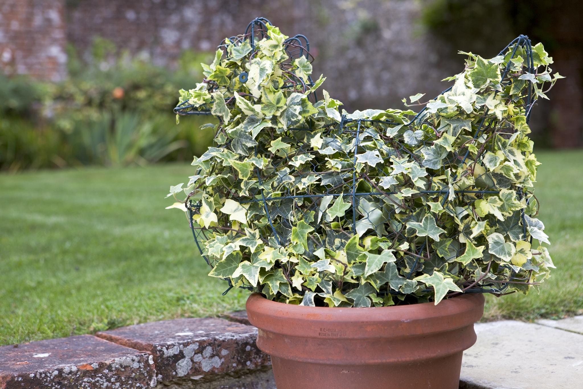topiary-ivy-chicken-3