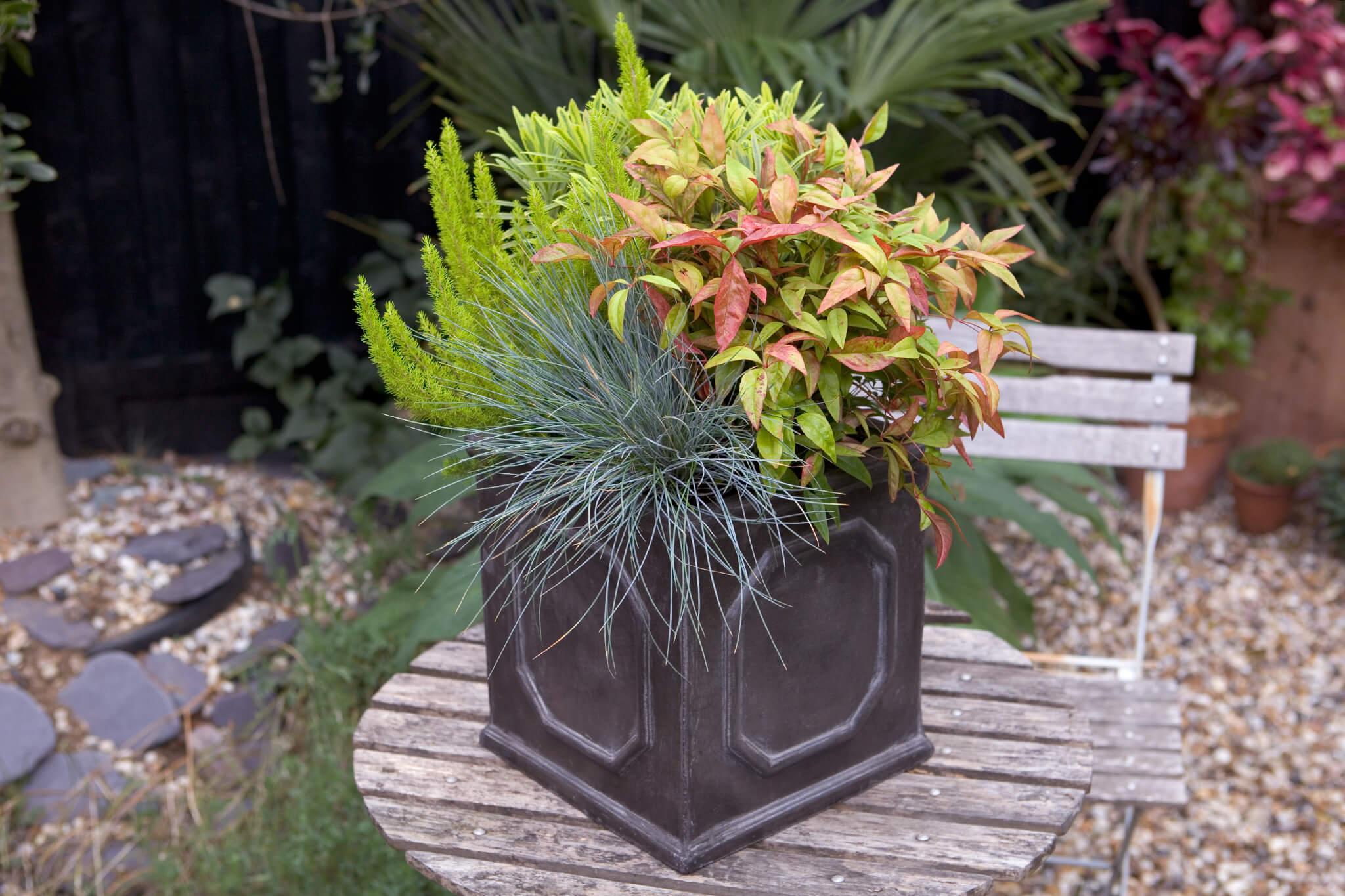 Euphorbia and lime heather