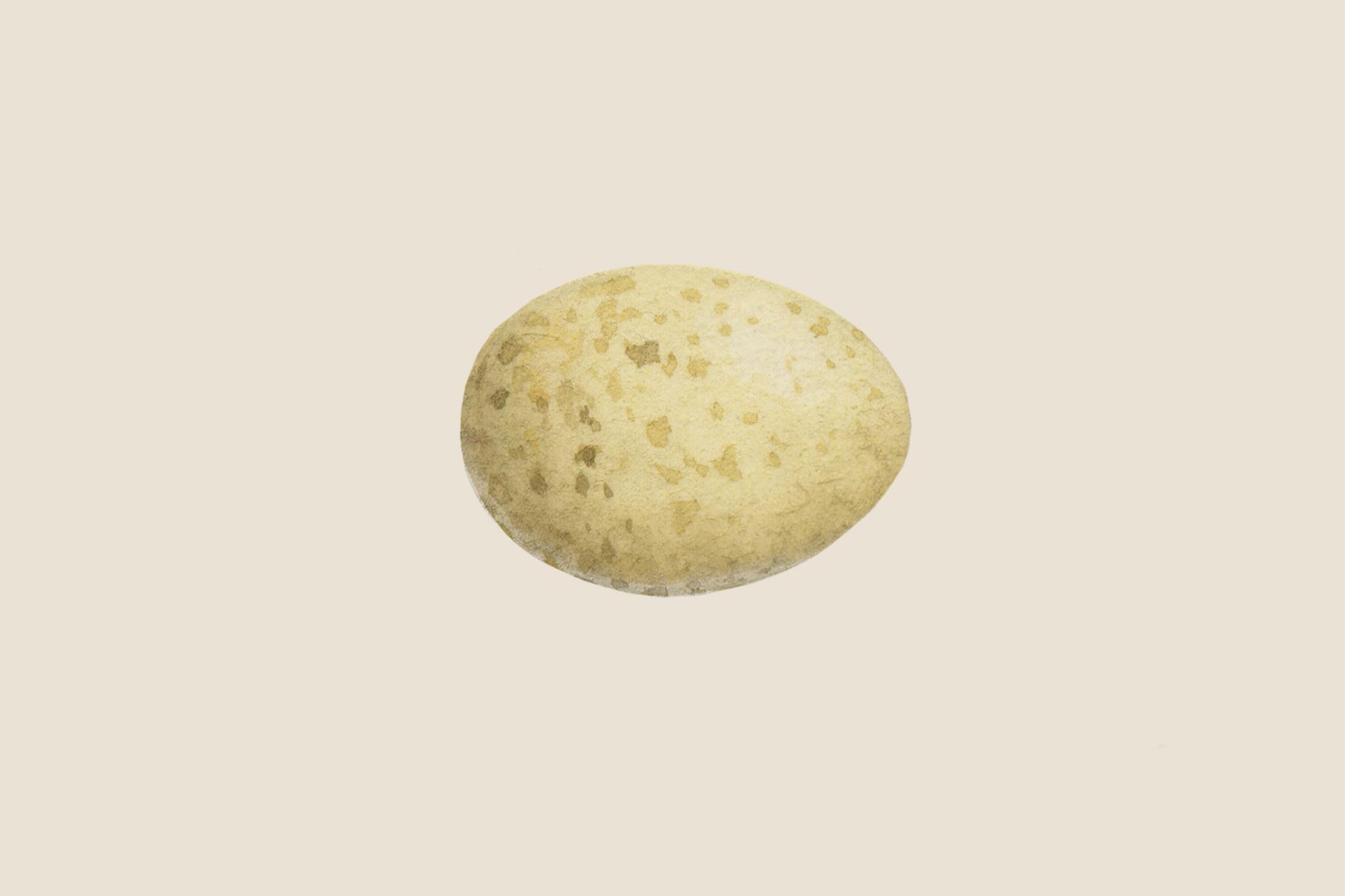 robin-egg-3