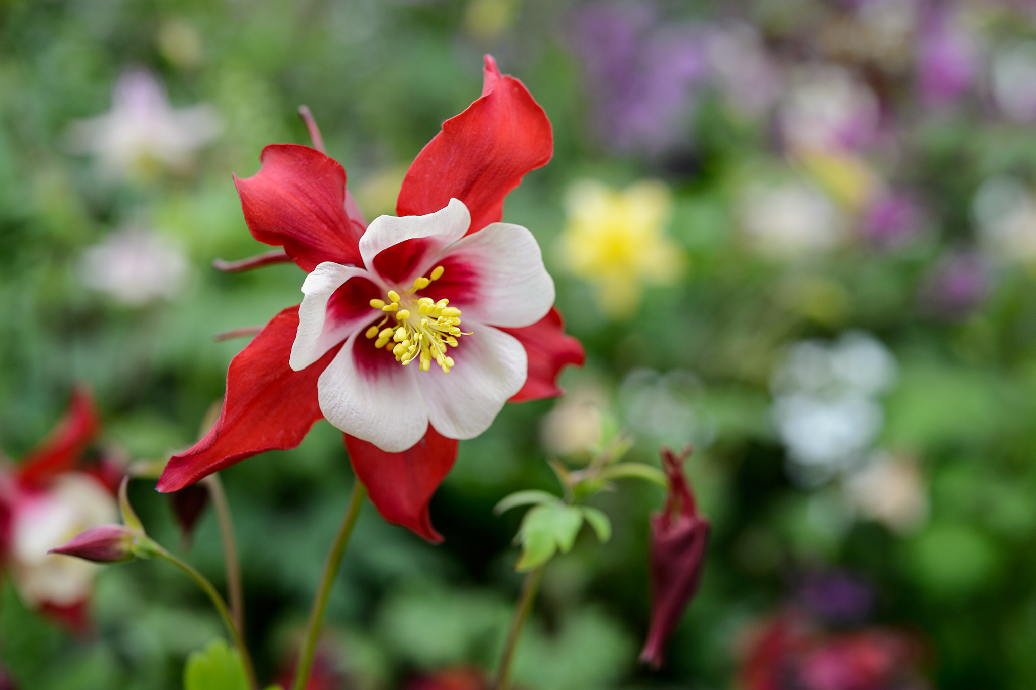 10 Plants To Save Seed From Gardenersworld