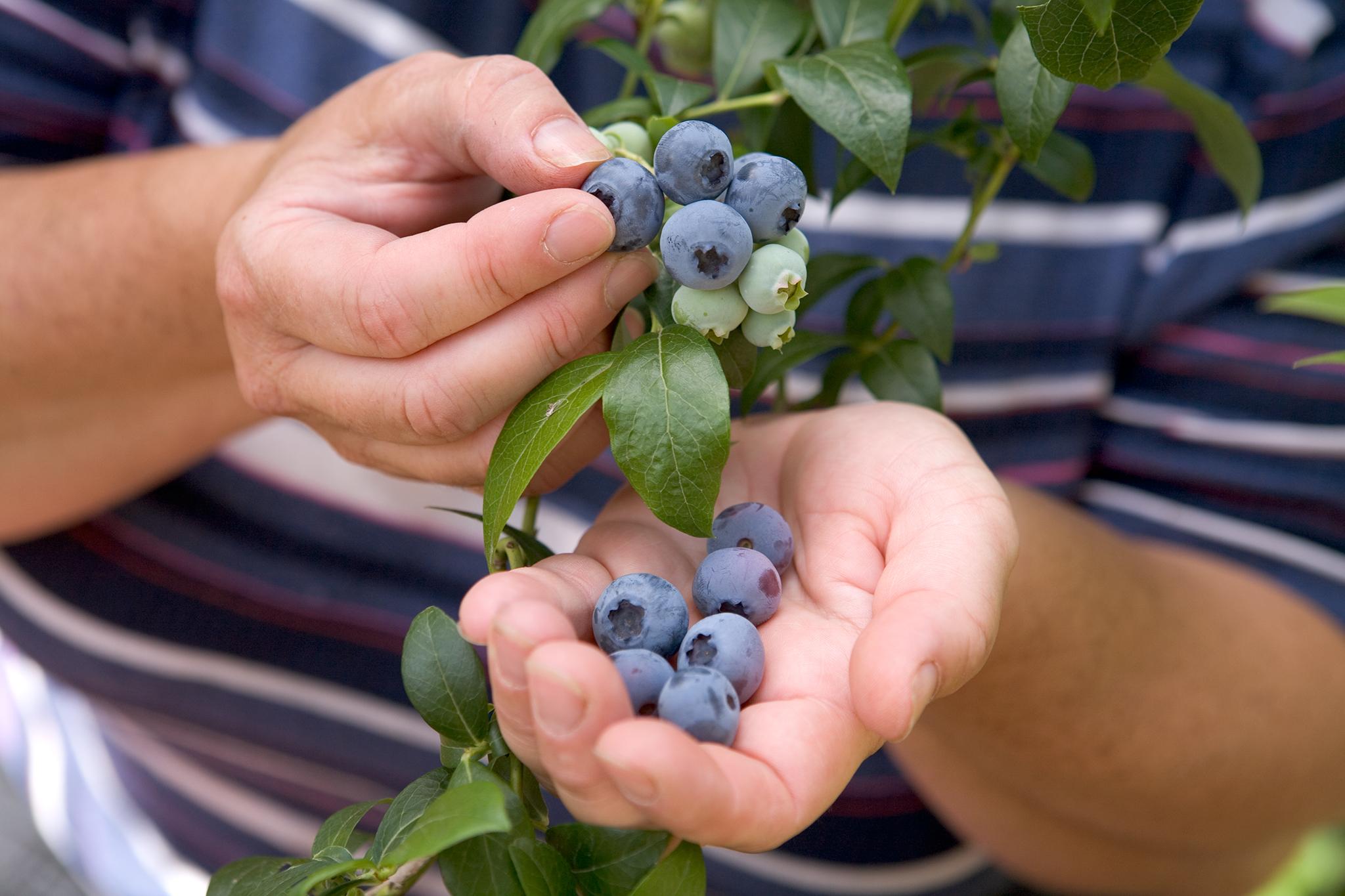 blueberries-10