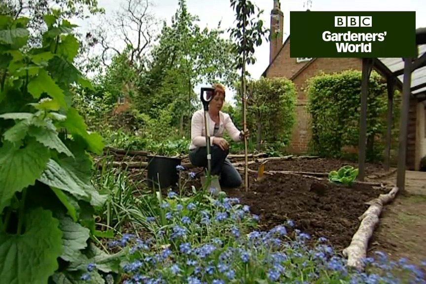 how to plant garden. how to plant a cherry tree video garden