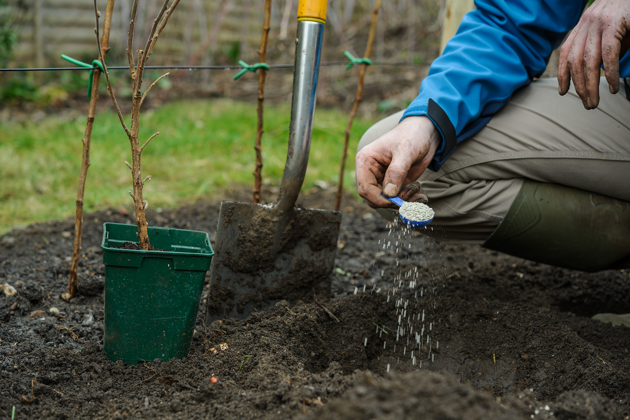 adding-fertiliser-to-the-planting-hole-for-currants-2
