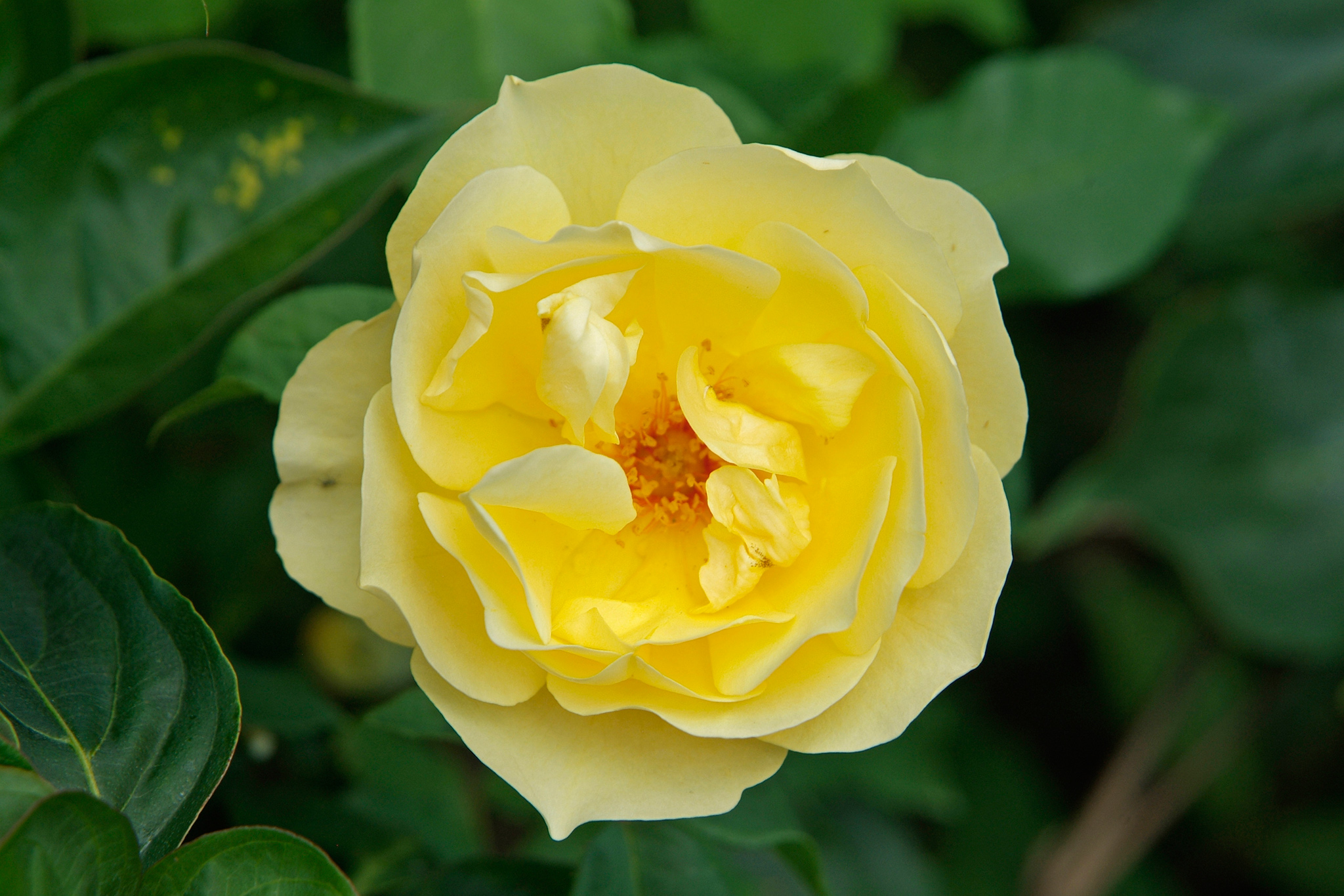 rosa-graham-thomas-5