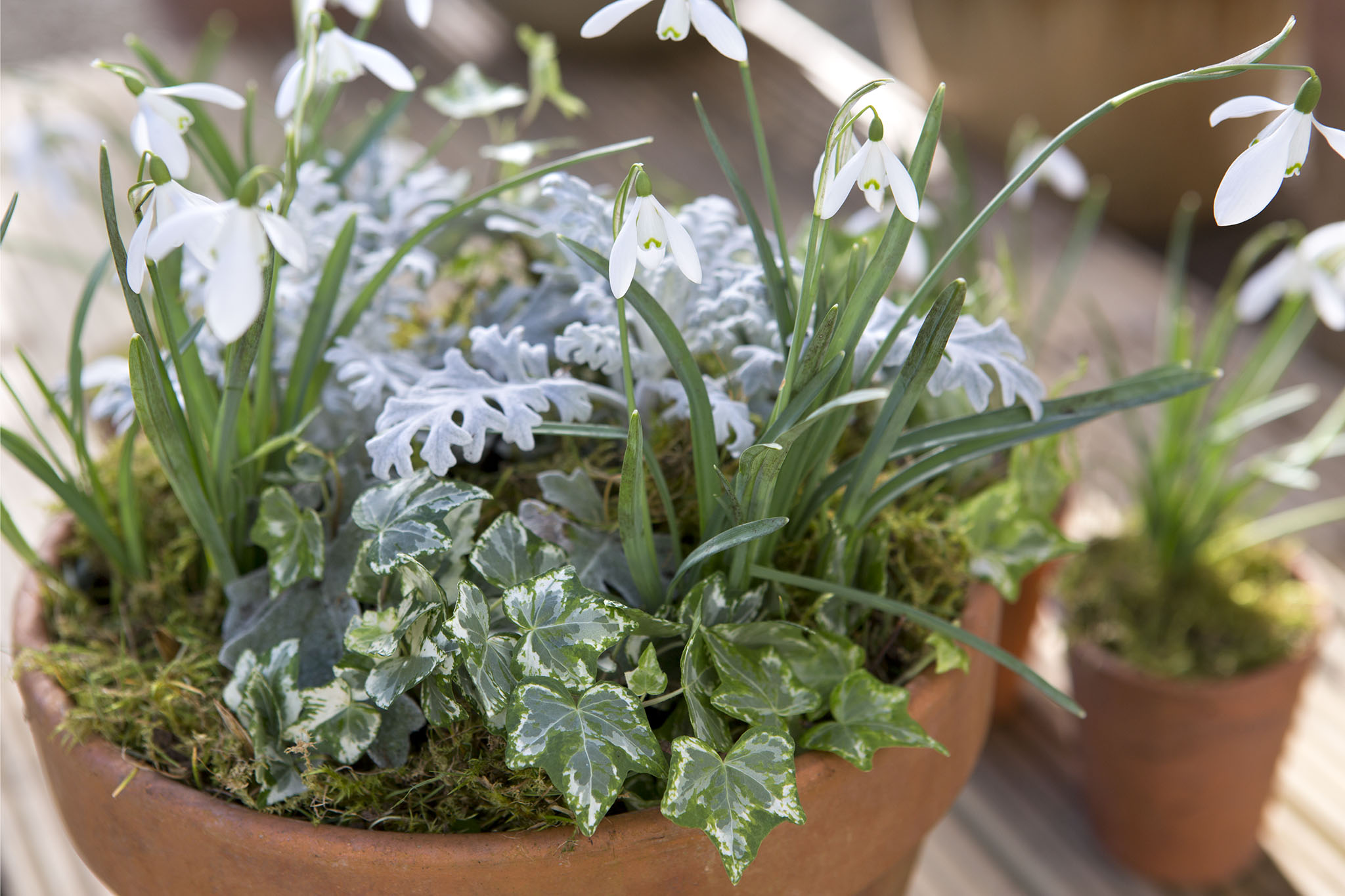Snowdrop container