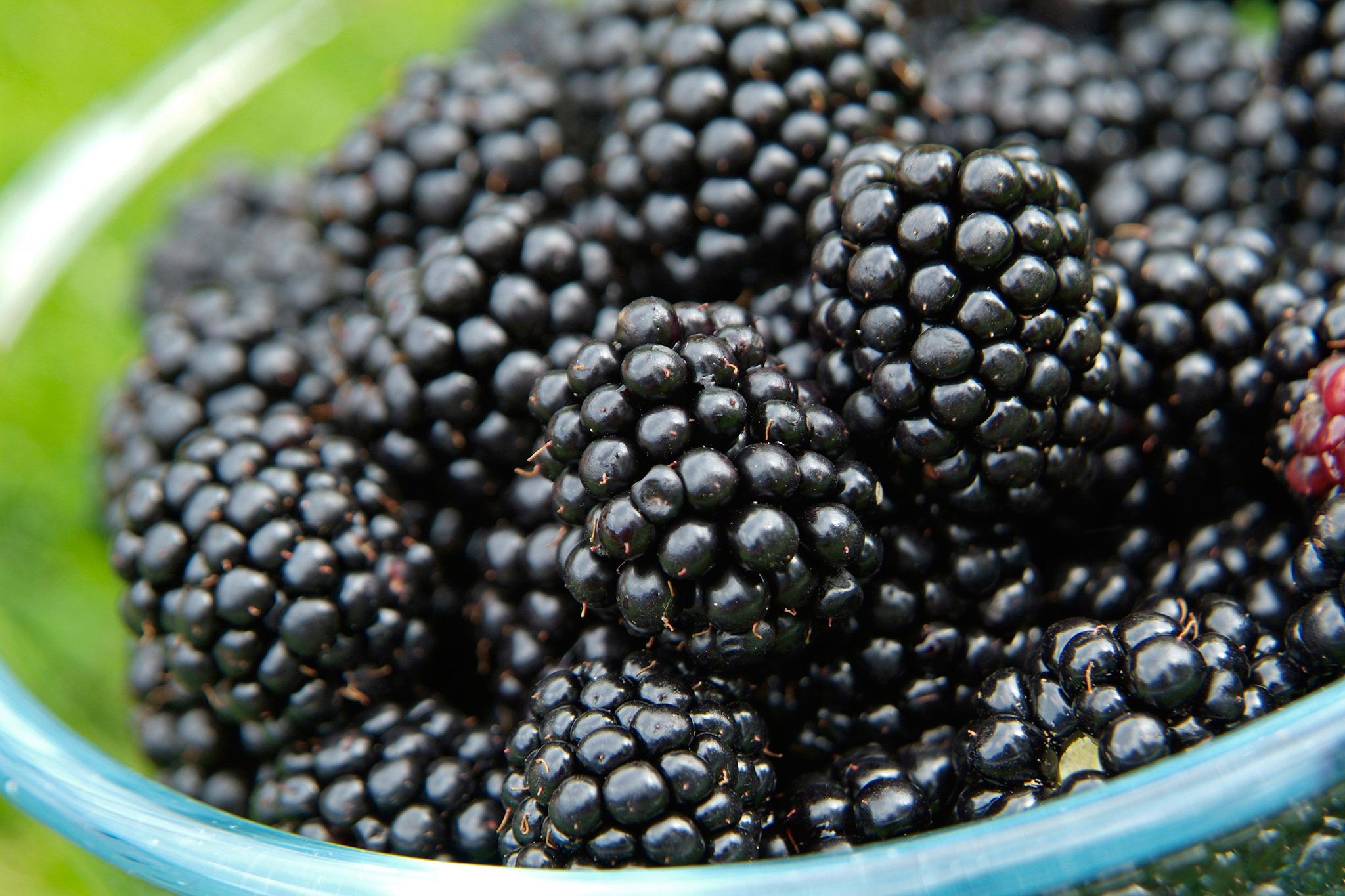 blackberries-10