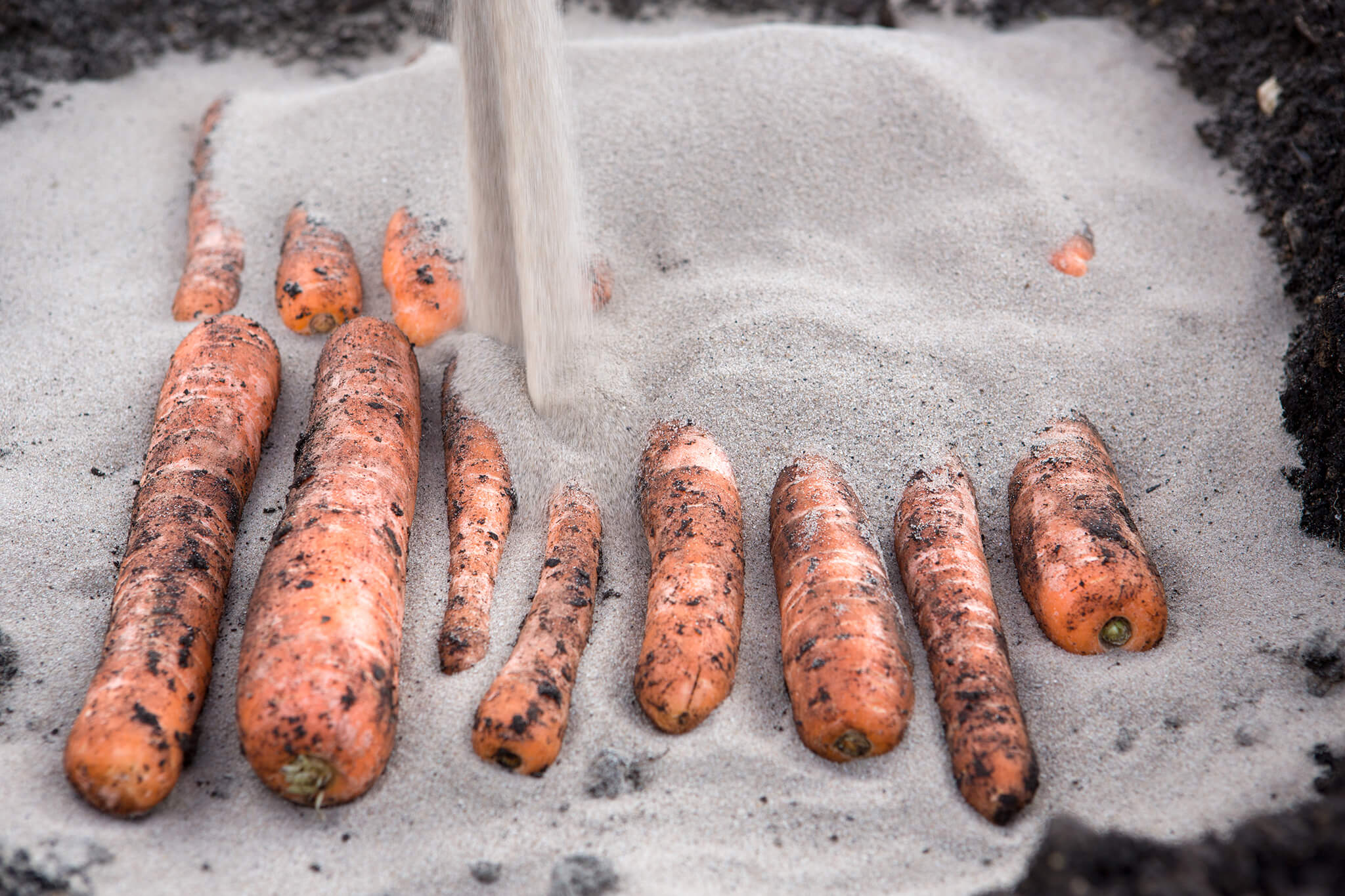 add-the-carrots-then-add-more-sand-2