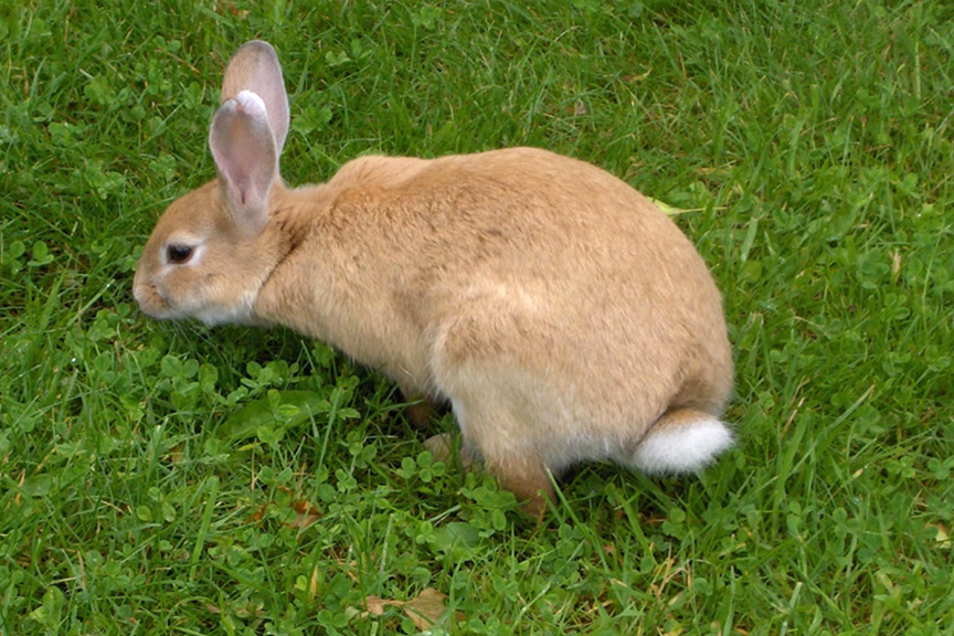 How to keep rabbits out of gardens - How to keep rabbits out of a garden ...