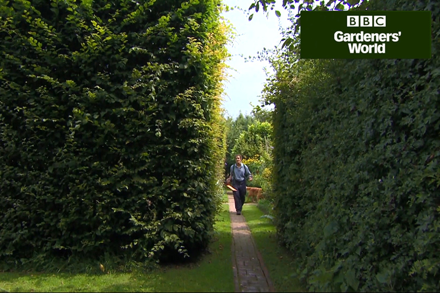 How to trim hedges in summer video