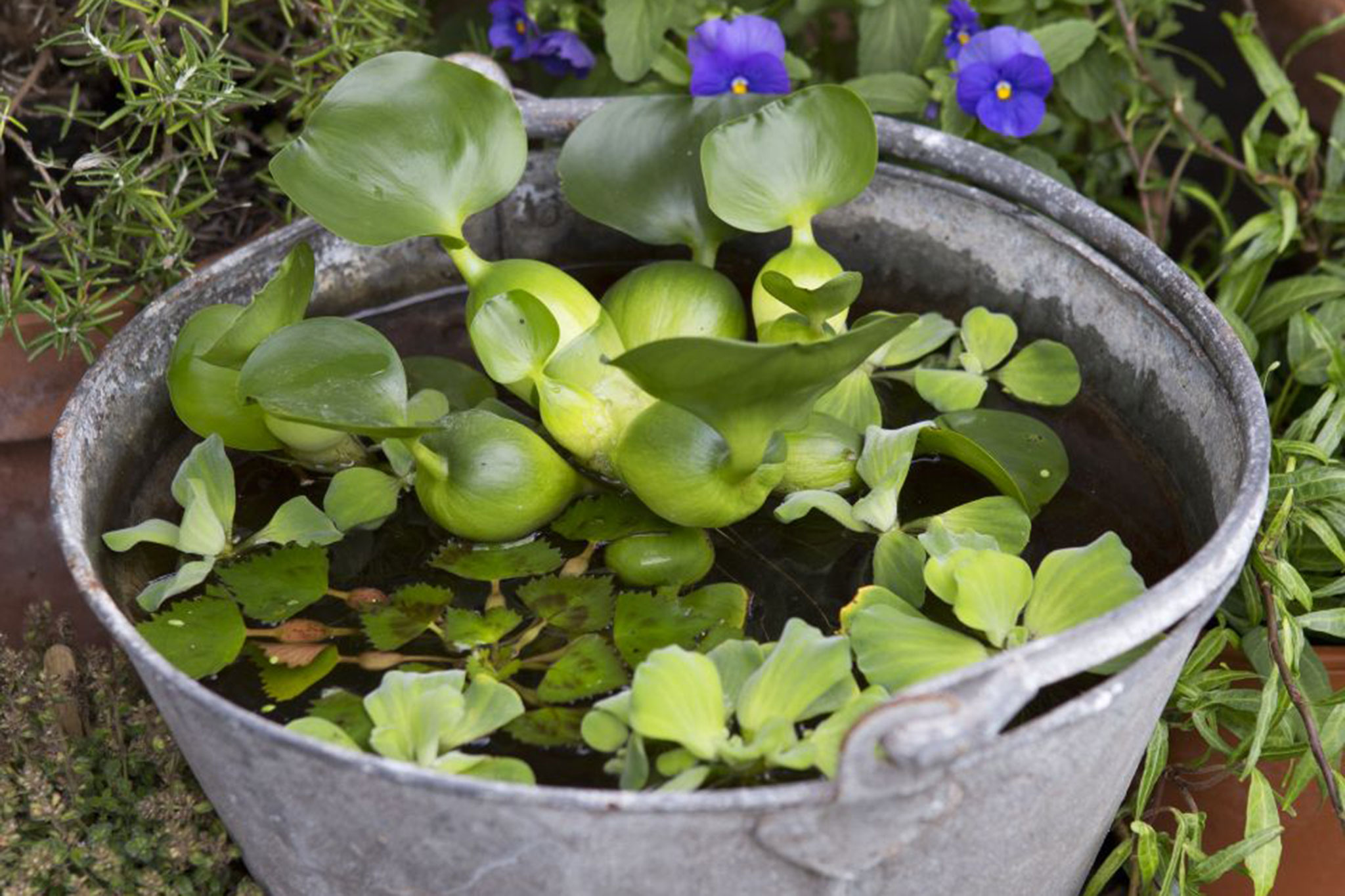 make a mini-pond  in pictures