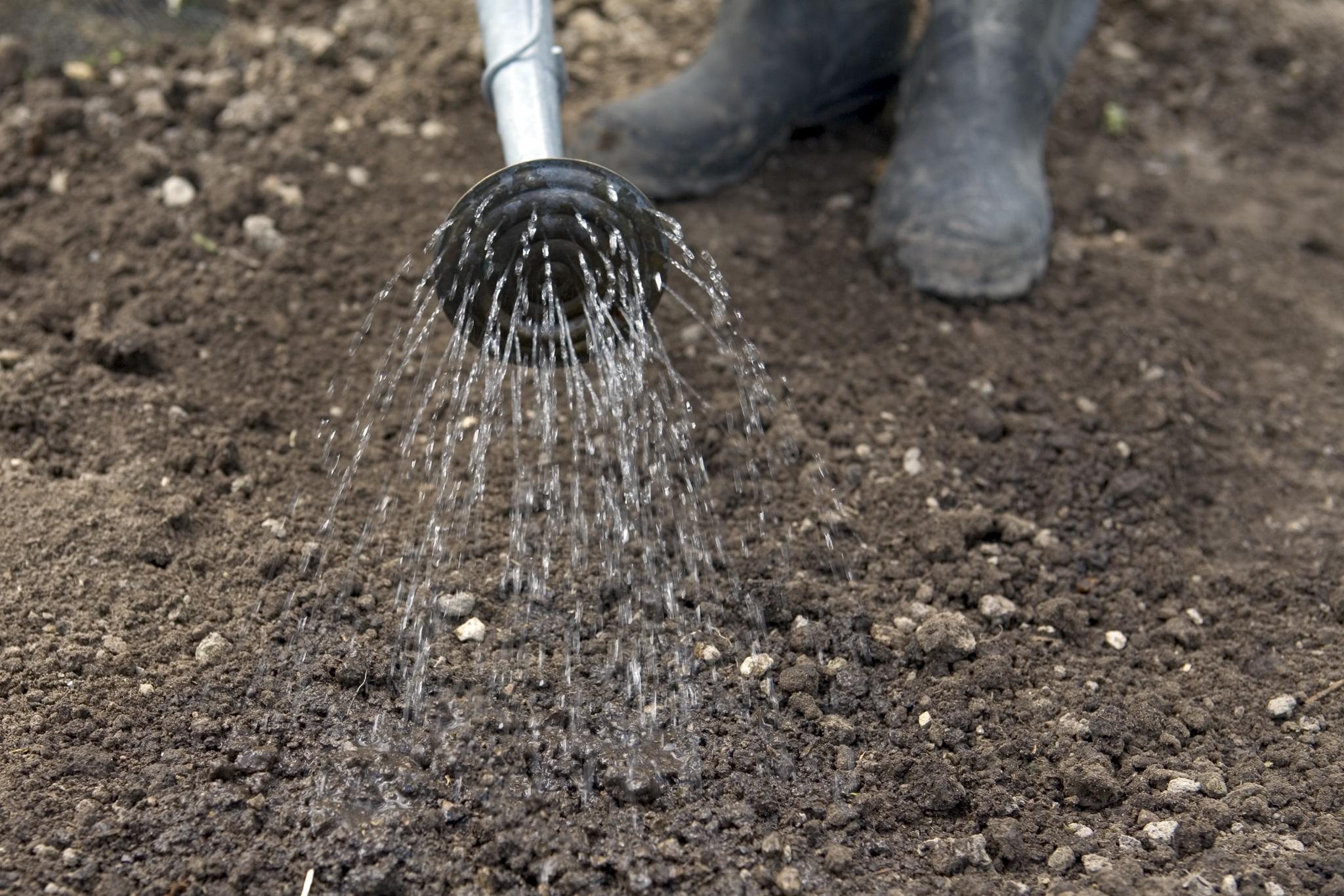 watering-rocket-seeds-2