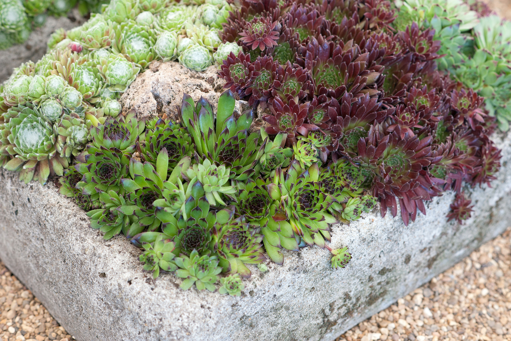 selection-of-succulents-2