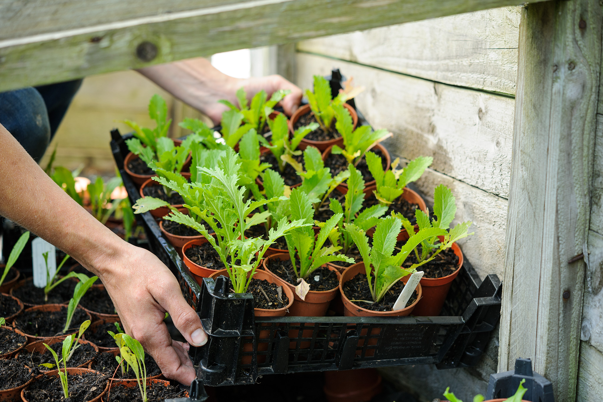 How to use a cold frame in spring video