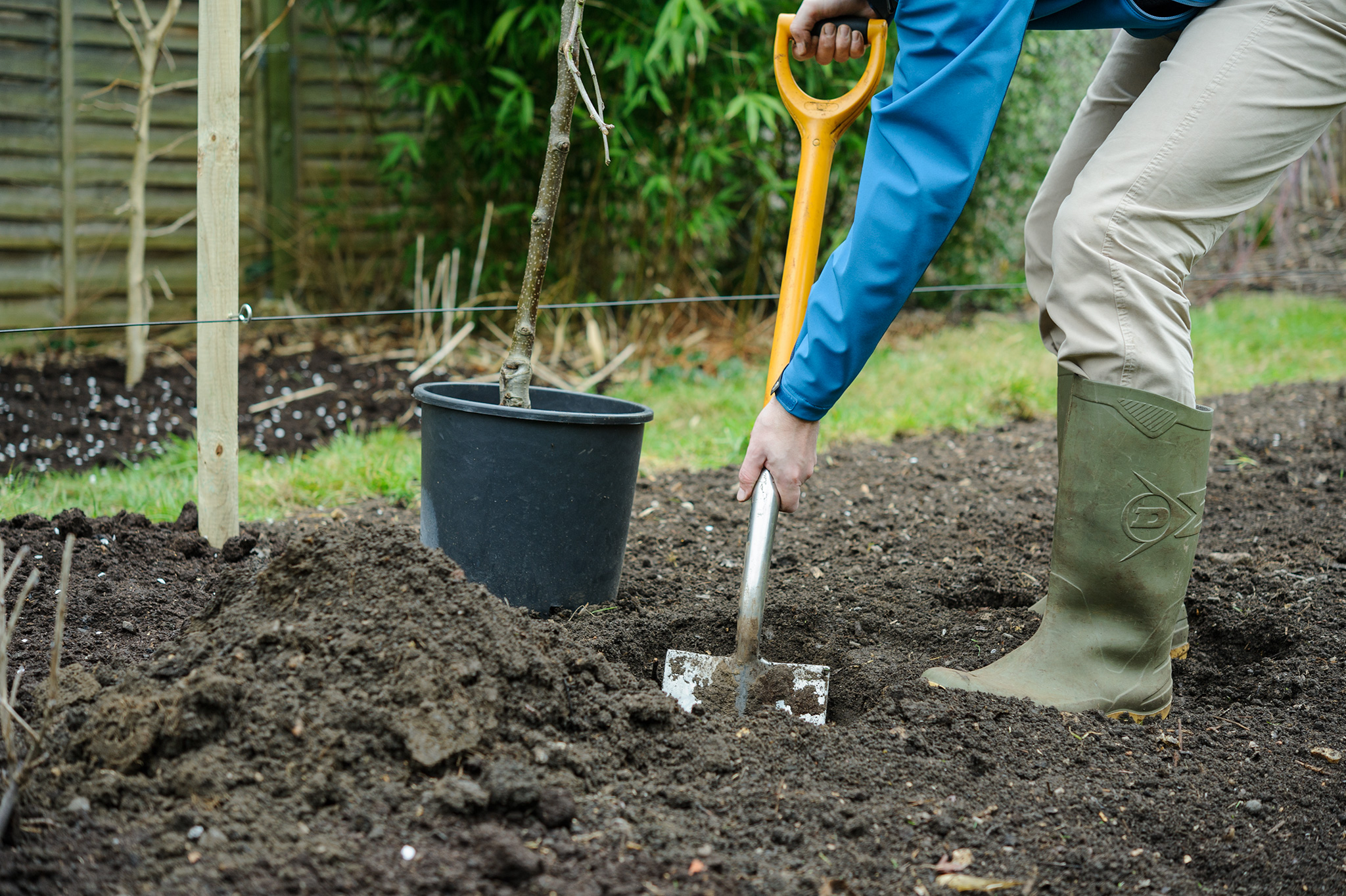 digging-a-hole-to-plant-an-apple-tree-2