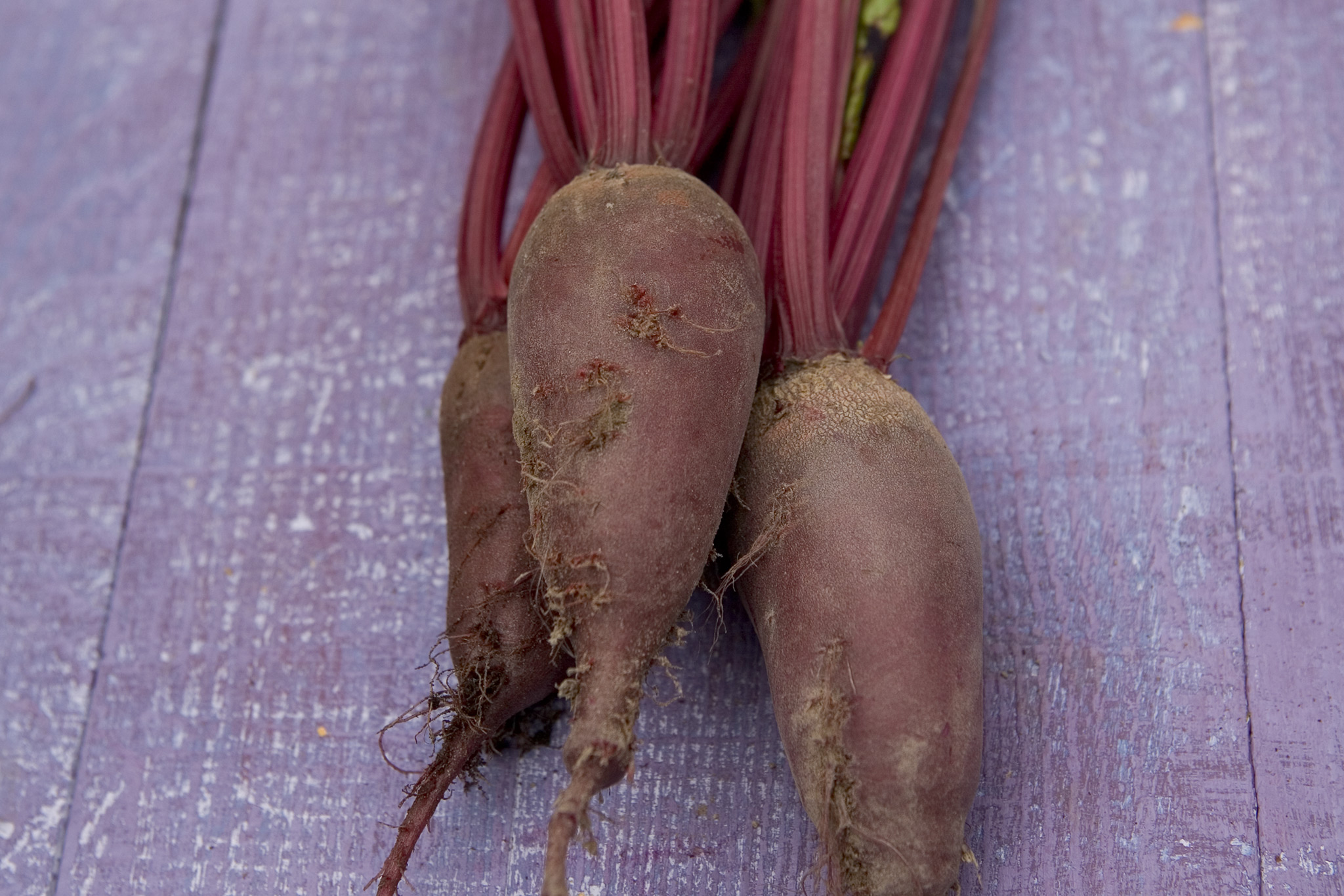 beetroot-cylindra-4