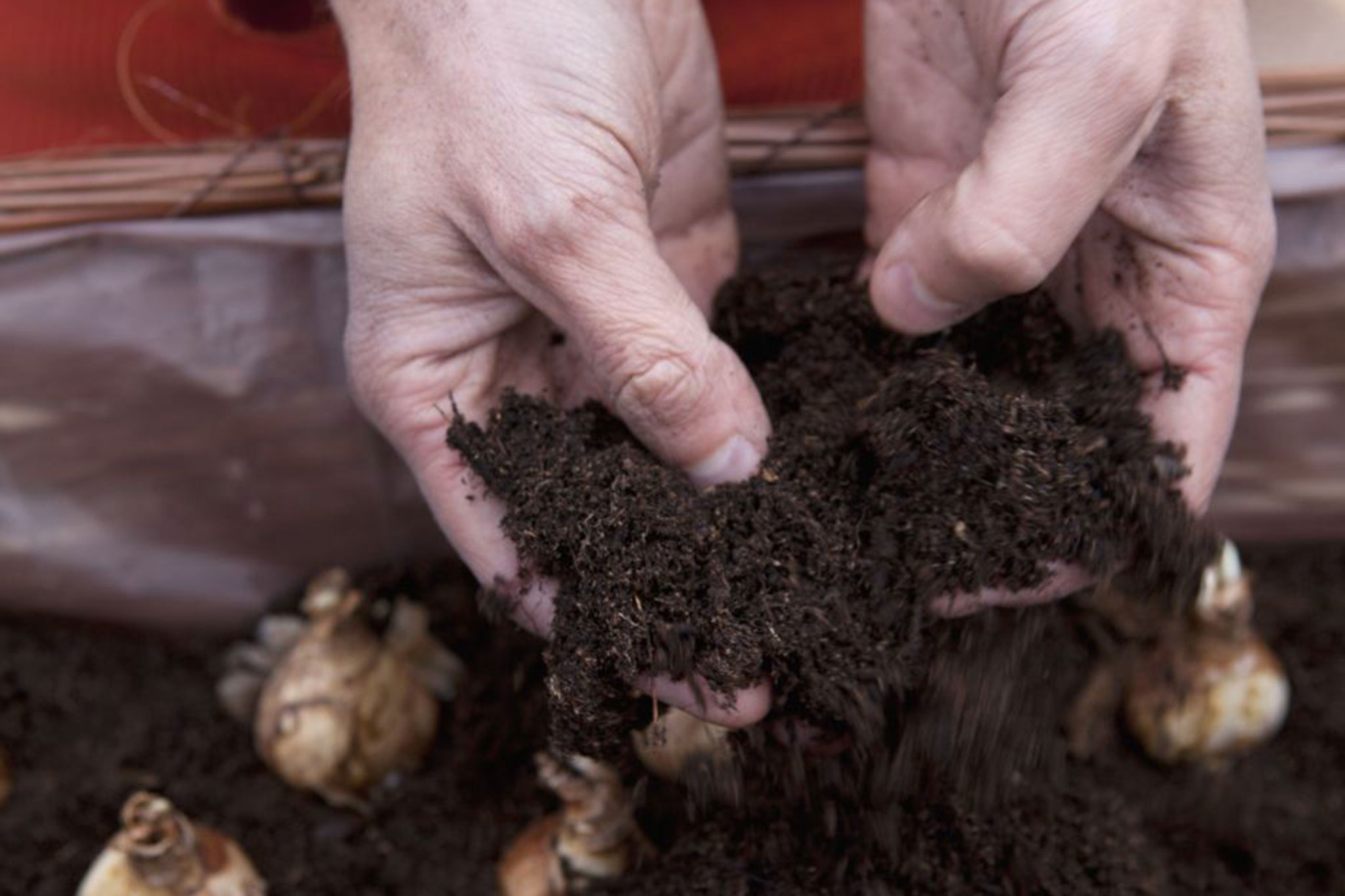 covering-the-bulbs-with-compost-3