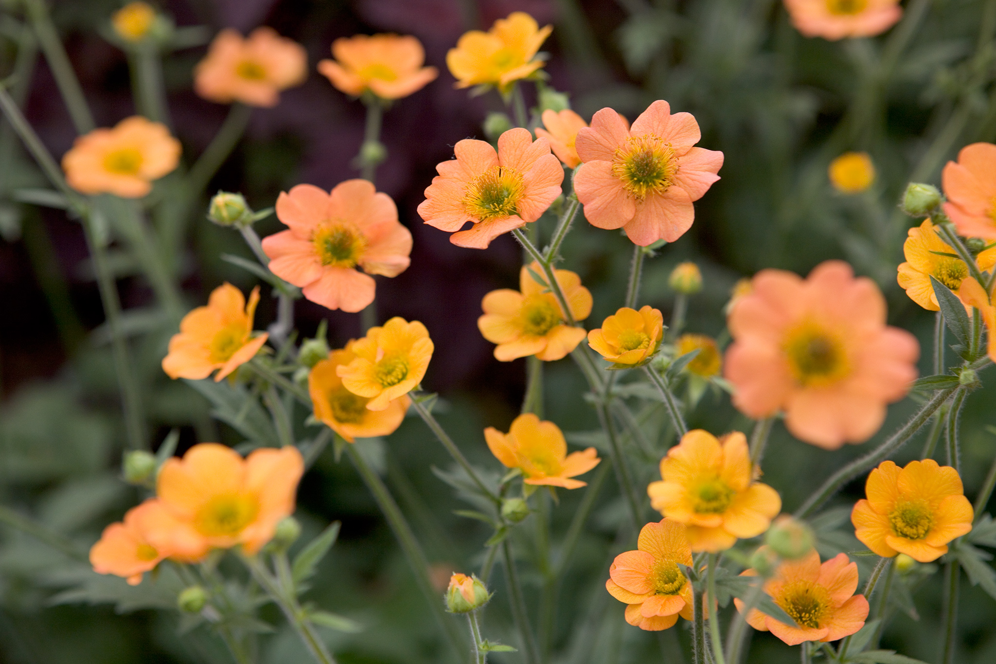 geum-totally-tangerine-3