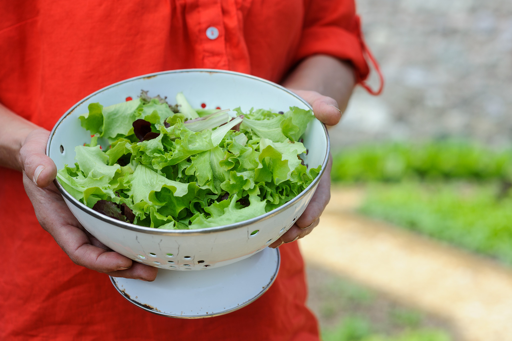 Freshly harvested salad leaves