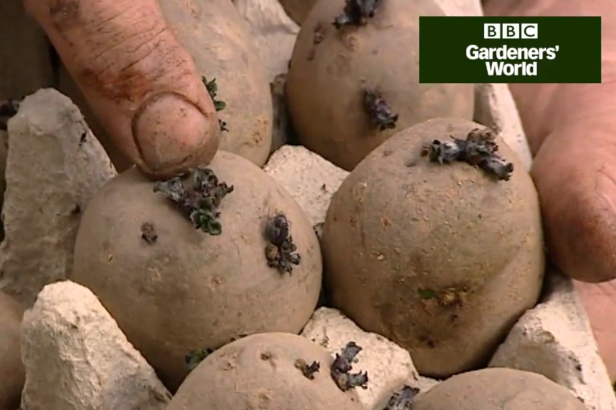 How to grow early potatoes video