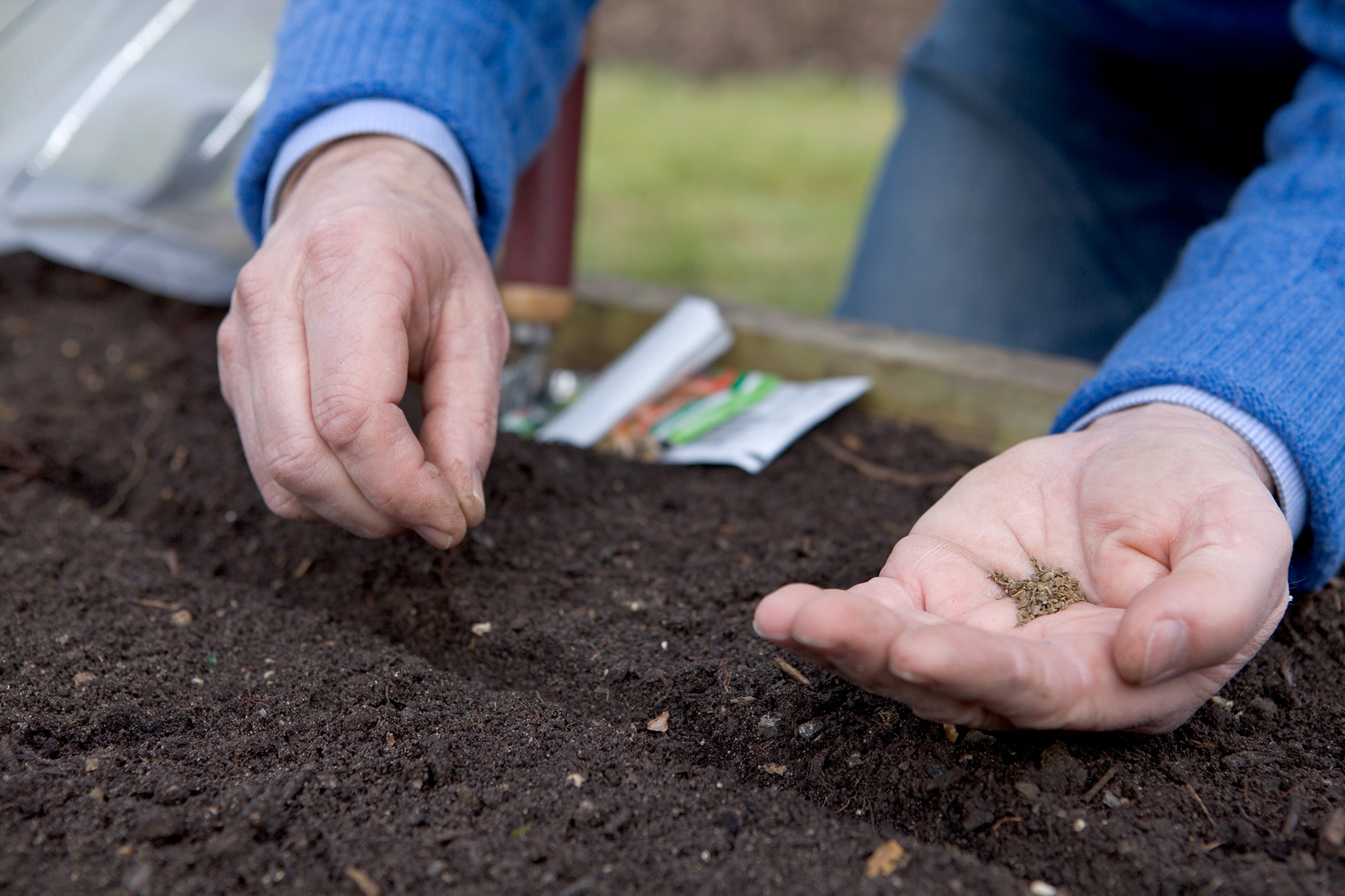 sowing-carrot-seeds-4