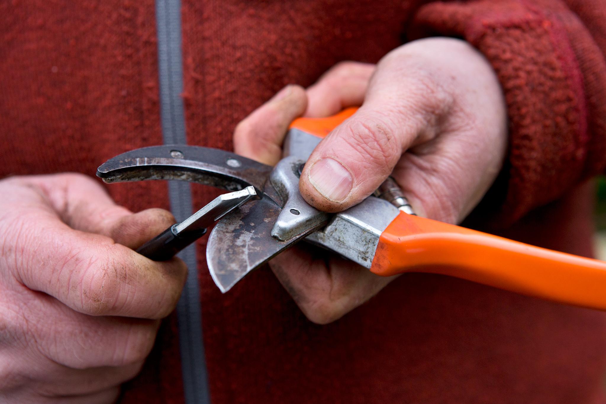 sharpening-secateurs-8