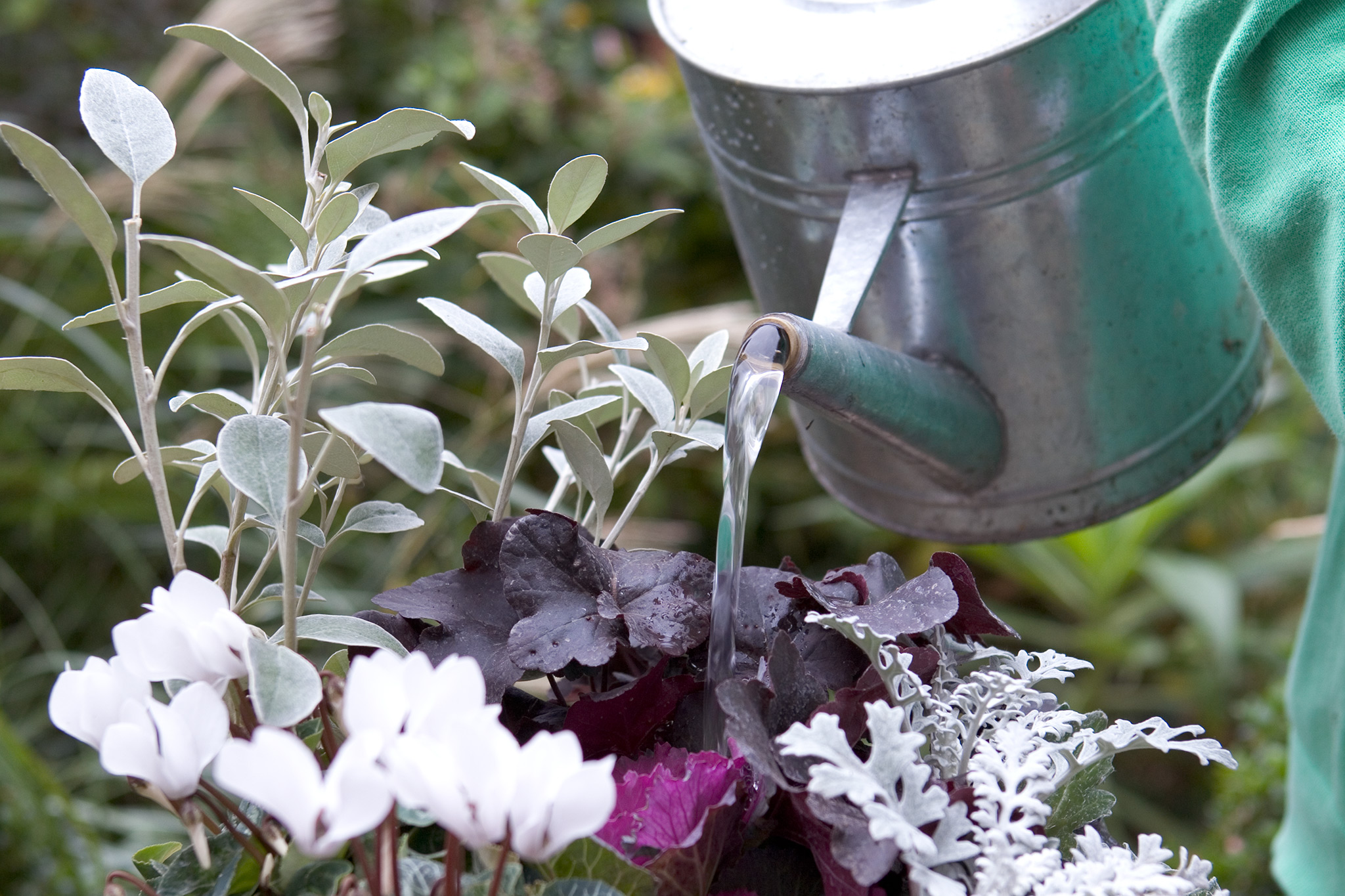 watering-the-pot-2