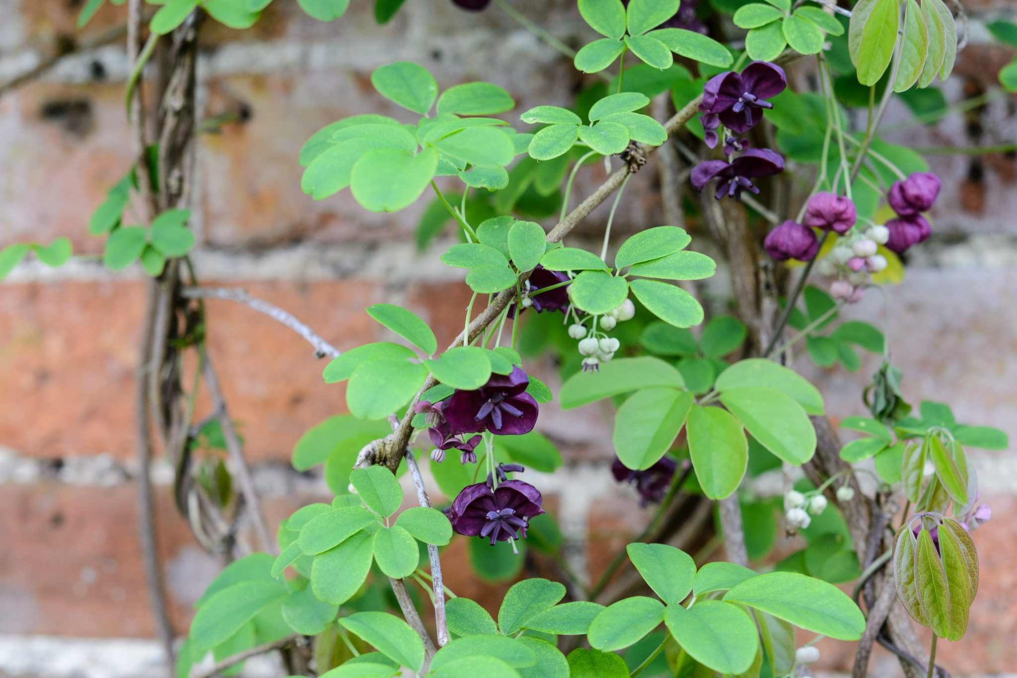 Five scented plants for april gardenersworld 99773 3 mightylinksfo