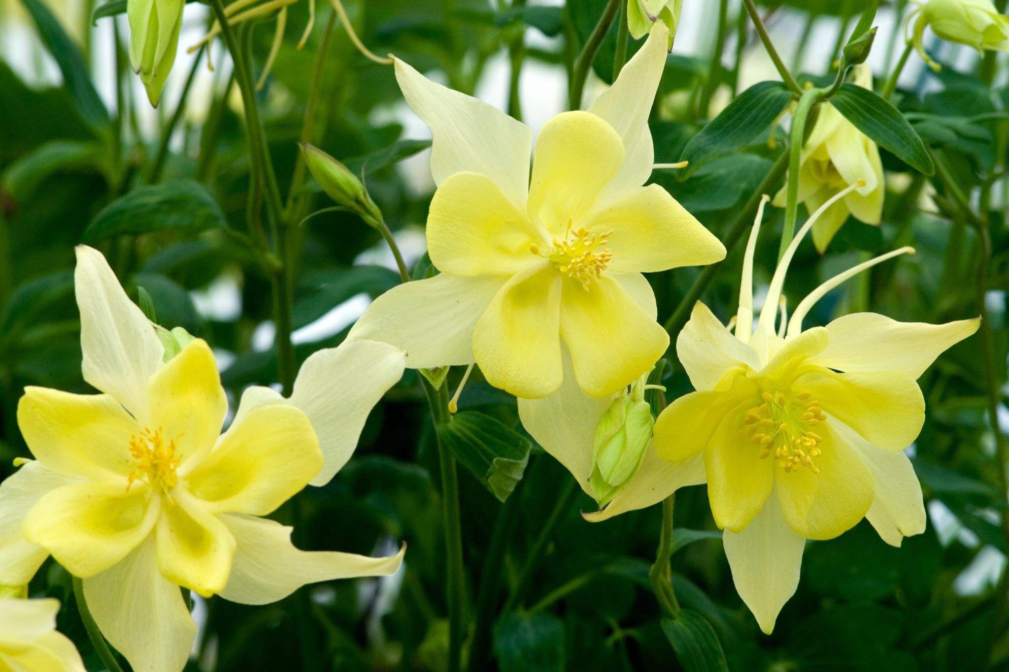 Flower Seeds To Sow In Summer Gardenersworld
