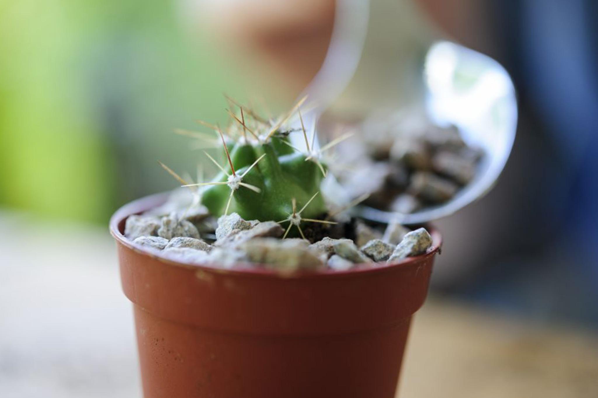transplanting-cacti-3