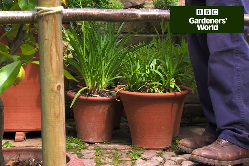 How to holiday proof your patio pots video