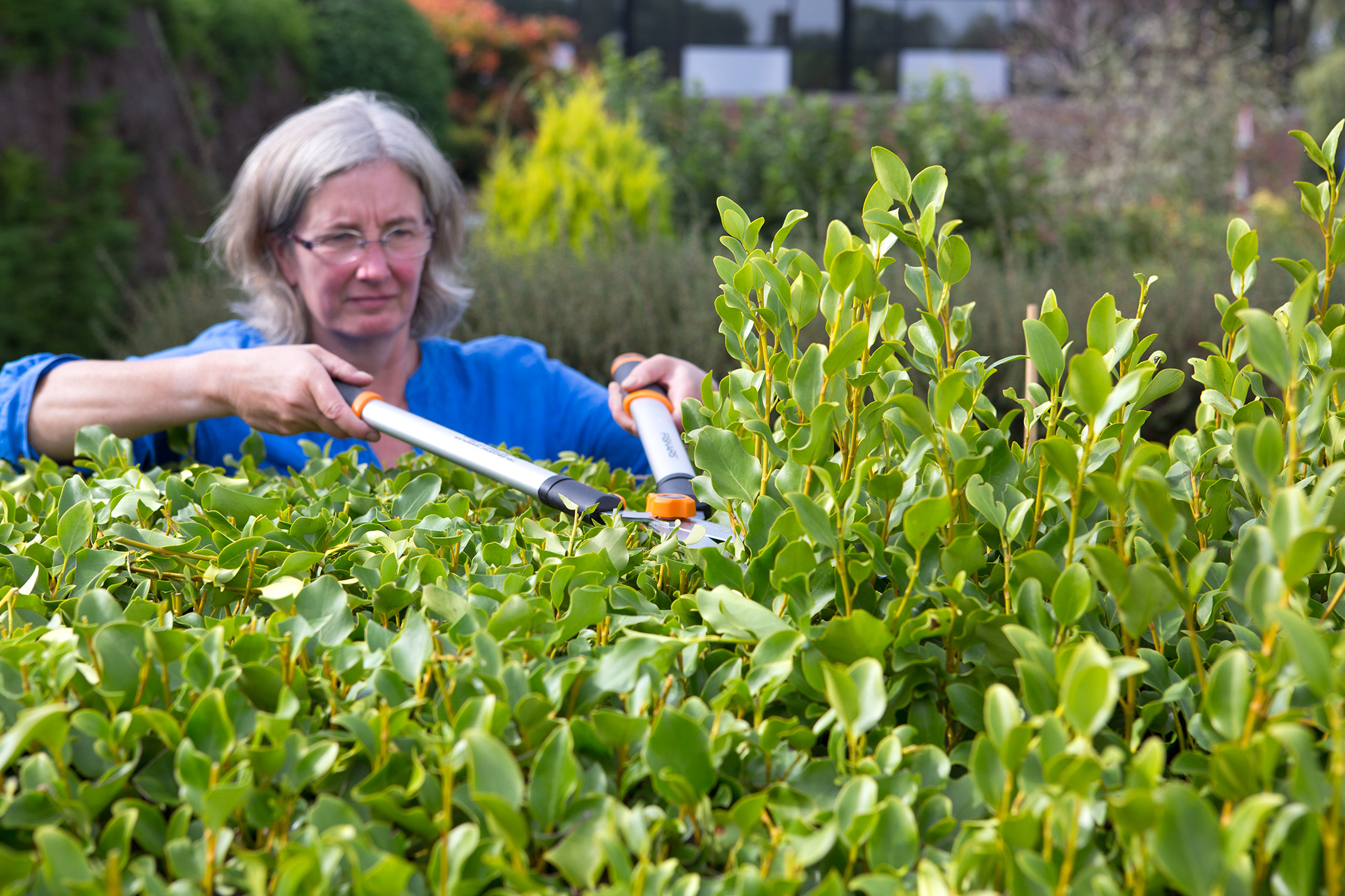 pruning-the-top-of-the-hedge-4